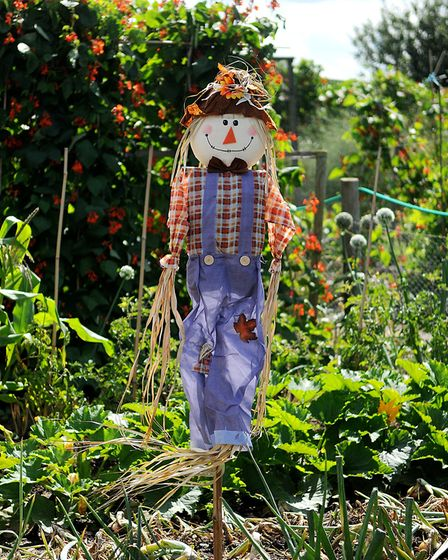 A scarecrow on a plot at the Hunstanton Allotments. Picture: Chris Bishop