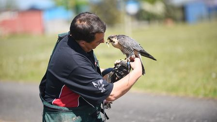 NBC Environment's working birds are used to control species like gulls and pigeons to reduce their n