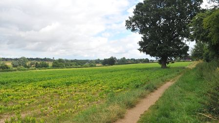 Up to 170 new homes, a new football pitch and a country park could be built in Brundall. PHOTO BY S