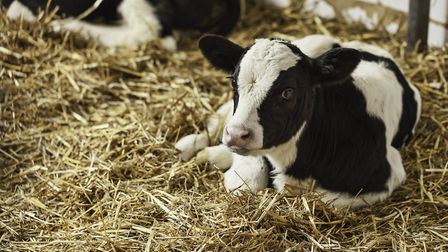 Experience the joy of farmyard animals this summer with your family. Picture: Thinkstock/Ngaga35.