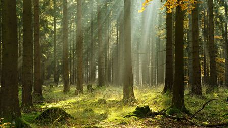 Head off for a magical adventure in the woods. Picture: Thinkstock/AVTG