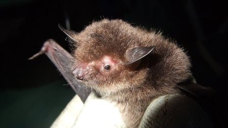 Anglian Water volunteers have been counting bats at the Beccles water recycling centre. Picture : Su