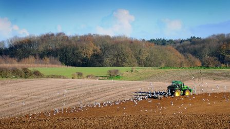 A farmer ploughing his field at Bayfield. Picture: ANTONY KELLY