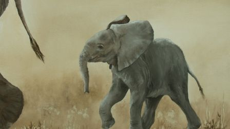 Part of the Sketch For Survival collection for Explorers Against Extinction. Artwork by Emma Bowring