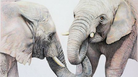 Part of the Sketch For Survival collection for Explorers Against Extinction. Artwork by Jill Parry.