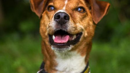 Rex at Dogs Trust Snetterton is looking for a new home. Picture: DOGS TRUST SNETTERTON