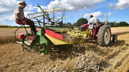Old fashioned harvesting in Ingworth ahead of the Ingworth Trosh. Picture: ANTONY KELLY