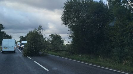 The fallen tree on the northbound carriageway of the Ipswich Road between Long Stratton and Tivetsha