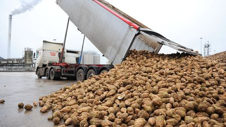 Beet being unloaded at the British Sugar factory at Cantley. Picture: James Bass