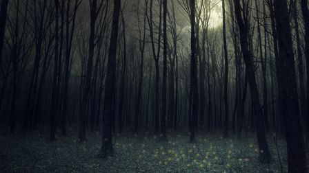 Moon light in darkness autumn forest. Beauty nature background. Picture: Getty Images/iStockphoto/ro