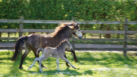 Max with mum Charlotte at Redwings Horse Sanctuary. Courtesy of Redwings