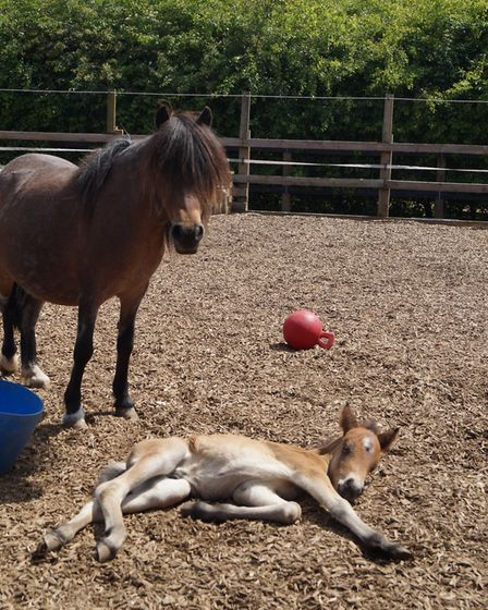 Roald with mum Beauregarde at Redwings Horse Sanctuary. Picture: Courtesy of Redwings
