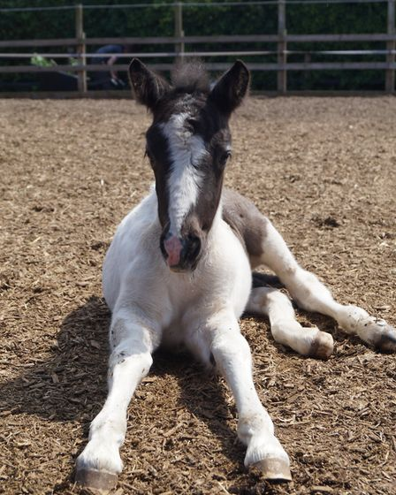 Sophie at Redwings Horse Sanctuary. Picture: Courtesy of Redwings