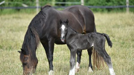 Big Star with mum Helen at Redwings Horse Sanctuary. Picture: Courtesy of Redwings