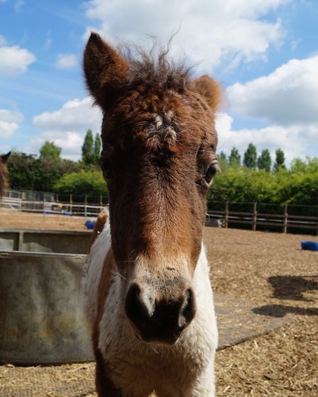 Peaches at Redwings Horse Sanctuary. Courtesy of Redwings