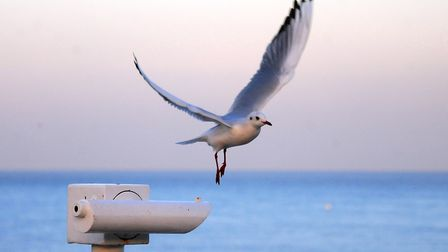 Some love them, some hate them. Everyone has an opinion on seagulls. Picture: ANTONY KELLY