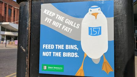 Litter is blamed for thriving gull populations in coastal towns. Photo: George Ryan