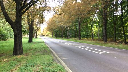 The A134, close to the Lynford Stag, heading towards Thetford. Picture: Archant