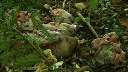 The organs that were found in the Woods. Picture: Submitted