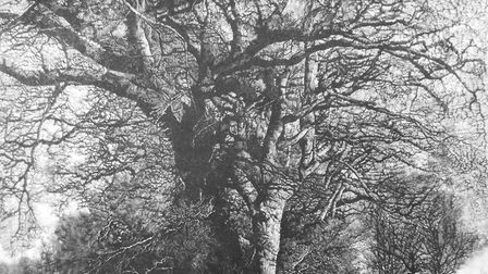 A mezzotint engraving of winter oaks near Surlingham broad created by Martin Mitchell. Picture: MART