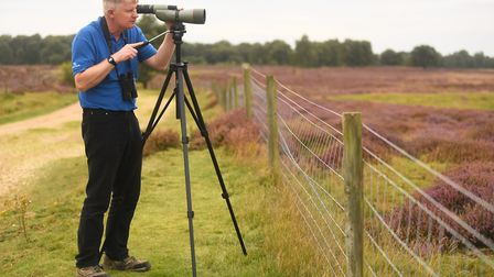 Stone-curlews are preparing for migration at Cavenham Heath. Pictured is Brecks RSPB project manager