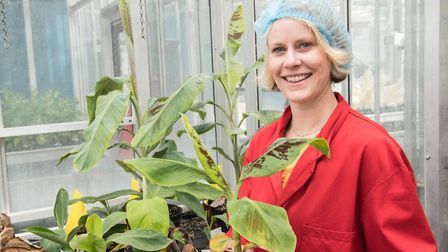 How to stop the banana killer, Srah Schmidt. Picture: Norwich Science Festival
