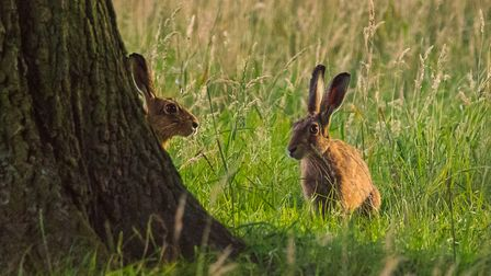 Hethersett could be getting a new nature reserve. Picture: Roy Howarth