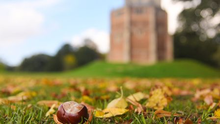 A conker lays amid leaves in the leaves in front of the Red Mount Chapel on The Walks, King's Lynn.