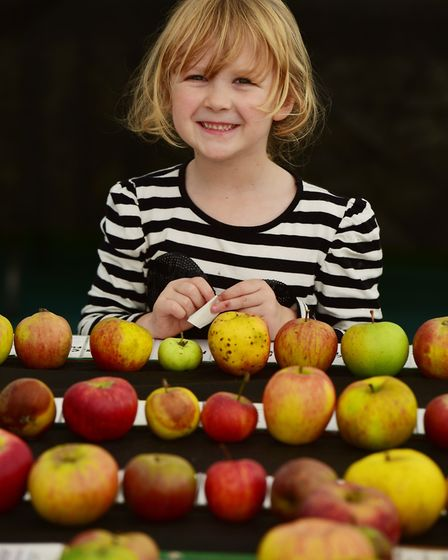 Apple Day at Gressenhall Farm and Workhouse museum of Norfolk Life.Dora Dinnebier, 5, looking at th