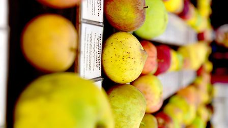 Apple Day at Gressenhall Farm and Workhouse museum of Norfolk Life.Picture: Nick Butcher