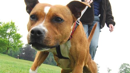 The Cinnamon Trust is appealing for dog walkers in the Bungay area. Picture: Archant.