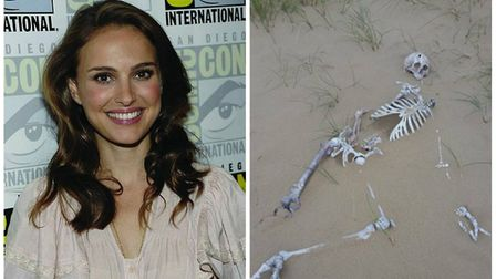 Sci-fi drama Annihilation, which filmed on location in Holkham has been given a release date. Photo