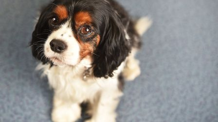 Dudley the dog at Red Balloon Learner Centre in Norwich.Picture: ANTONY KELLY