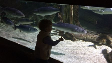 Alex loved Great Yarmouth Sea Life Centre. Picture: Sally White