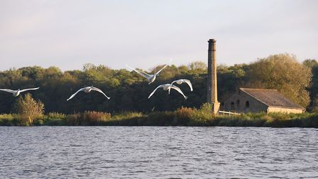 Autumnal scenes on the Broads. Five swans fly along the River Yare. Picture: DENISE BRADLEY
