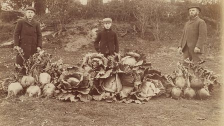 East Wretham giant vegetables grown at Fowl Mere in 1902. Photo: Norfolk County Council www.picture.