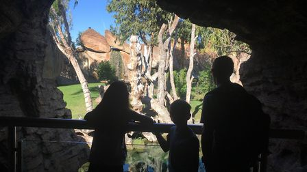A view from one of the tunnels at Bioparc zoo. Picture: Charlotte Smith-Jarvis