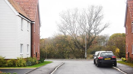 An oak tree on the Etling View housing development site in Dereham, has been saved by a preservation