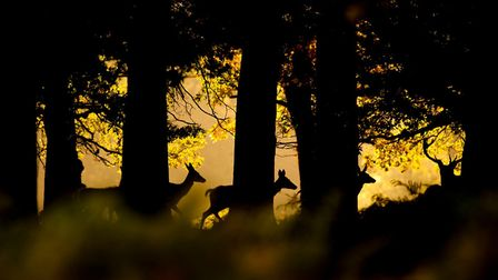One of Tom Mason's wildlife photographs. Pictures: supplied by NNPS