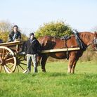 A century year-old horse drawn tumbrel has been restored and is now being used at Gressenhall. Pictu