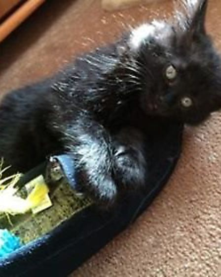 Russell the kitten has now found his forever home (Photo: Lindsey Knights)