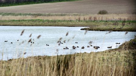 Cley Marshes is a haven for wildlife. Picture: MARK BULLIMORE