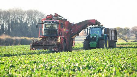 Sugar beet, here being harvested in north Norfolk, has been the star performer for the year. Picture