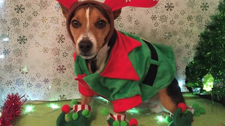 Dog Jack was entered into last year's competition. Picture: ABBI LAWRENCE