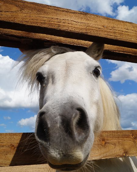 Sampson - a happyy horse. Picture: REDWINGS HORSE SANCTUARY