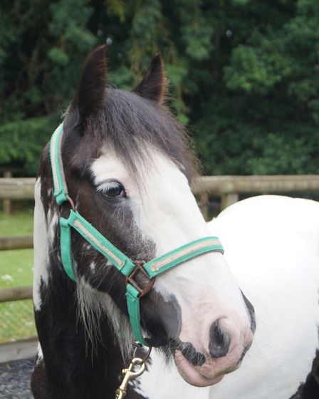 'We waved an emotional goodbye to Oakley this autumn... a first pony for his new 11-year-old rider,