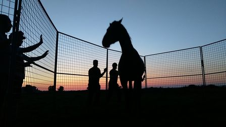 A beautiful sight at Redwings. Picture: REDWINGS HORSE SANCTUARY
