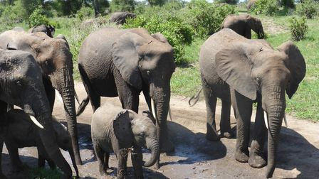 Some of the beautiful wildlife Dr Edwards encountered while holding workshops in Tanzania. Picture: