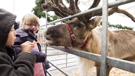 Youngsters from Norwich Primary Academy school meet Father Christmas and his reindeer.Picture: Nick