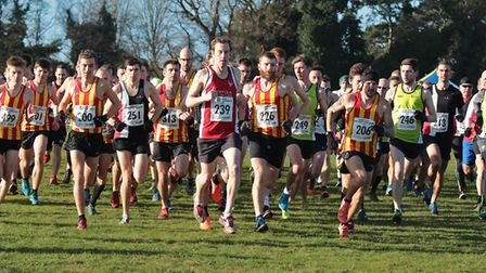 The start of the Senior Men's race at the Norfolk Cross Country Championships. Picture: Tony Payne
